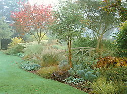 Misty autumnal border with wooden bridge at Glen Chantry. Planting includes Prunus sargentii, Acer griseum and Calamagrostis brachytricha.