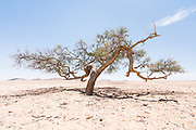 Under intense sunshine, surrounded by arid plains and distant mountains, we blasted along deserted dust roads in this vast empty space. It was quite a surprise on reaching the brow of an infinite hill, to suddenly see isolated trees dotted around. They were more like surreal incongruous sculptures than any object of normality. <br /> This is what we found about Namibia, that the landscapes although huge, do vary. It almost imperceptible at first but you come to realise that you are indeed no longer in the same place you were!