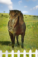 Brown horse in green field behind fence (digital composite)