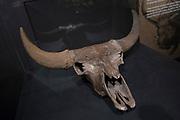 Nieuwe expositie in de Amsterdam Expo - Giants of the Ice Age de grootste reizende tentoonstelling over de ijstijd ooit.<br /> <br /> Op de foto:  De tentoonstellingsruimte met o.a. uitgestorven zoogdieren