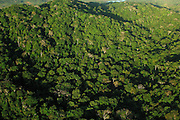 Aerial view over Rainforest canopy, Chagres national park, Panama, Central America