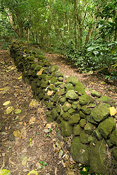 Hawaii: Molokai, Halawa Valley, ancient stone walls, senn during hike in past taro fields, ancient walls, to waterfalls, guided by Lawrence Aki..Photo himolo239-72434.Photo copyright Lee Foster, www.fostertravel.com, lee@fostertravel.com, 510-549-2202