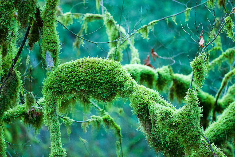 In a typical western Washington Forest, you'll find moss, owing to the year-round wet, damp conditions a mild climate. Here in the forest, you will see more then you've ever seen anywhere else!