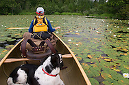 Canoeists and dog paddling through lily pads on Crooked Lake of Sylvania Wilderness Area of the Ottawa National Forest near Watersmeet Michigan.