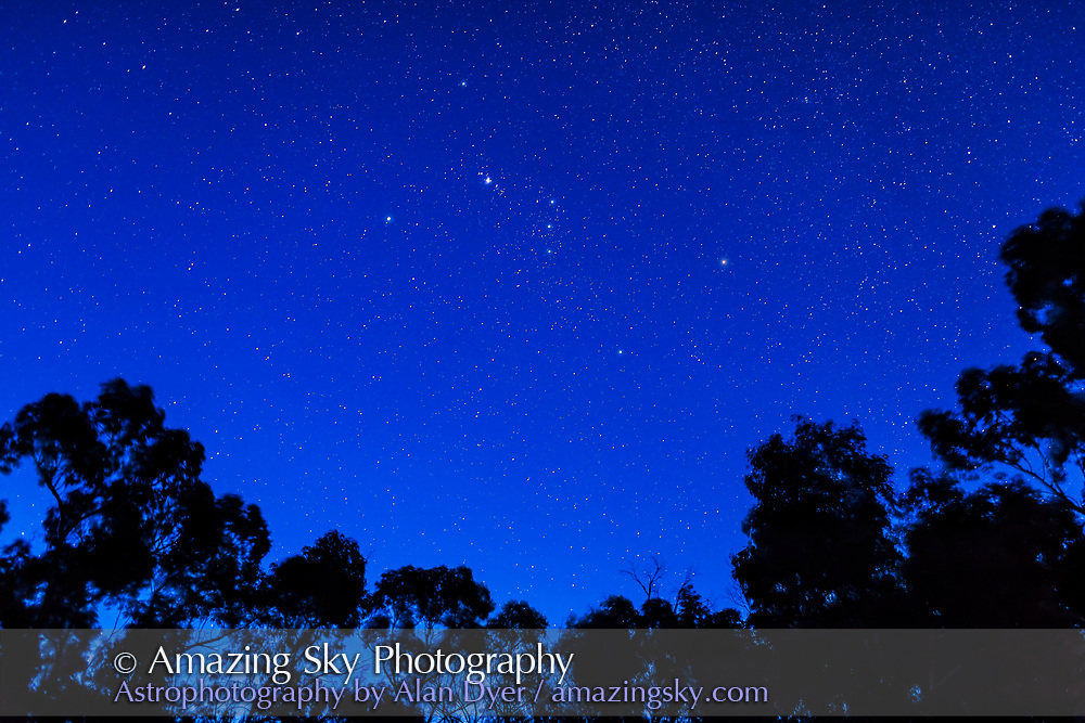 Orion setting from Australia in deep blue twilight, over gum trees. <br /> <br /> This is a stack of 5 x 10-second exposures for the ground and one 10-second exposure for the sky, at f/2 with the 35mm lens and Canon 6D at ISO 800.