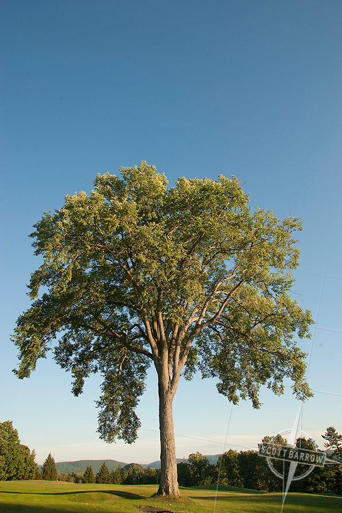 Elms are deciduous and semi-deciduous trees comprising the genus Ulmus in the plant family Ulmaceae.
