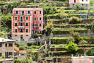 Homes were built into the steep landscape near the seaside town of Riomaggiore, Italy.