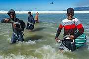 Undersize fish caught in a trek net haul and which were released back into the sea are grabbed by impoverished community members for food, Strandfontein, False Bay, Western Cape, South Africa