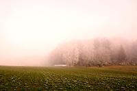 Swiss farmhouse and trees near a frosty, misty field near Aesch, Switzerland.