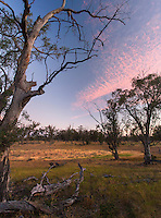 Sunset in an open grassy woodland, Wyperfeld National Park, Victoria, Australia