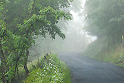 Fog on country road