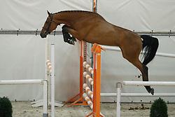 105, Hycella G<br /> Vrijspringen Nationale Merriekeuring, 3 jarige springmerries <br /> KWPN Paardendagen Ermelo 2015<br /> © Hippo Foto - Dirk Caremans