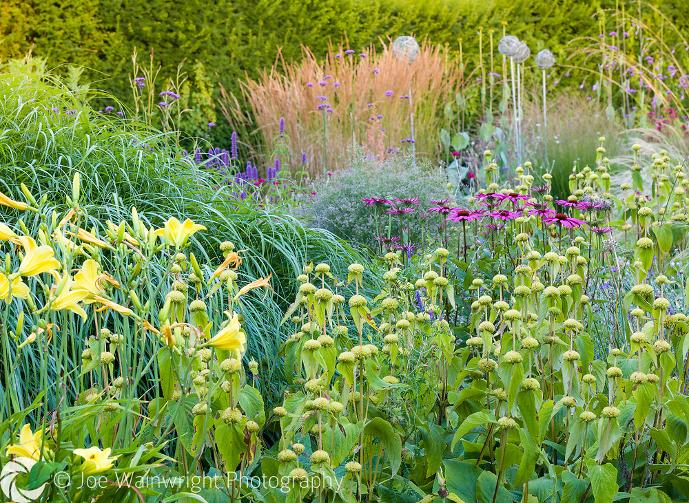 Herbaceous borders at Bluebell Cottage Gardens, Dutton, Cheshire, designed by Sue Beesley. Photographed in July. Planting includes Echinacea purpurea, Agastache, Lychnis coronaria, Verbena bonariensis and Hemerocallis 'Marion Vaughn'