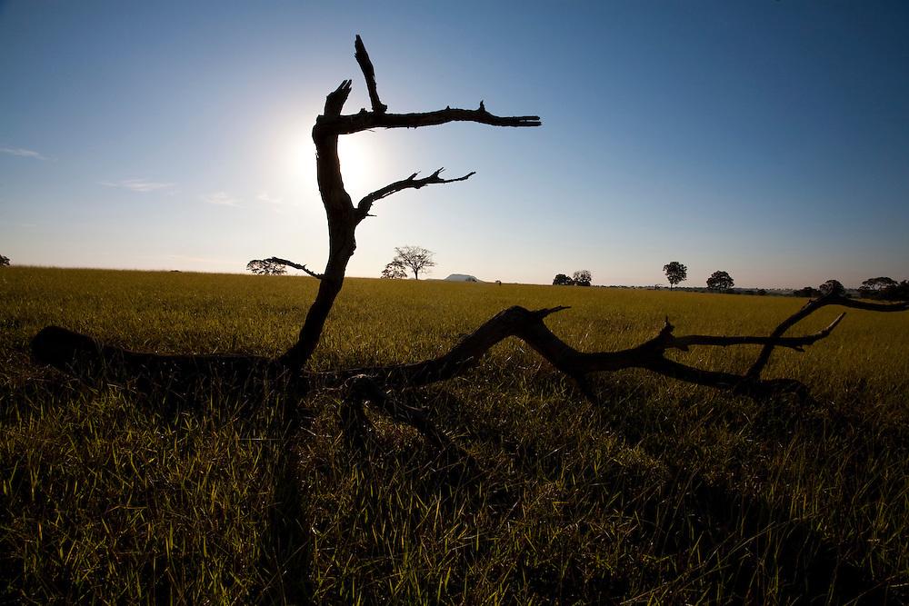 Uniao de Minas_MG, Brasil...Paisagem rural em Uniao de Minas, Minas Gerais...The rural landscape in Uniao de Minas, Minas Gerais...Foto: LEO DRUMOND / NITRO