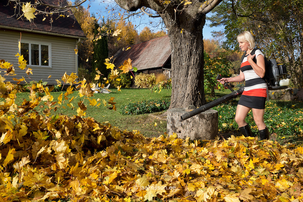 Woman working using leaf blower. Flying yellow autumn leaves. Rural homestead, building, house.