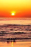Surfers at sunset, Ocean Beach, San Francisco, CA
