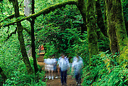 Image of hikers on a trail at Silver Falls State Park, Oregon, Pacific Northwest