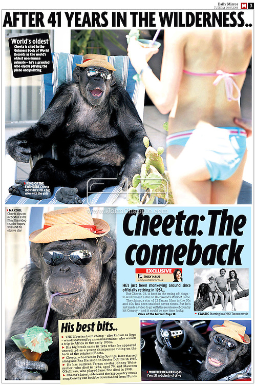 Daily Mirror (UK), 8th July 2008 Page 3..EXCLUSIVE 24th June 2008, Palm Springs, California. 76-year-old Cheeta, star of many Hollywood Tarzan films of the 1930s and 1940s, is coming out of retirement. Recognized as the oldest chimpanzee alive, the Palm Springs resident has just signed a record deal. To celebrate the signing, Cheeta made a promo music video to accompany his cover of the 1975 hit song 'Convoy'. PHOTO &copy; JOHN CHAPPLE / www.johnchapple.com<br /> tel: +1-310-570-9100