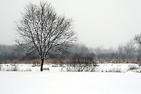 My wife and I are big bed and breakfast fans. The particular one we were travelling to was located in Reedsburg, Wisconsin on a retired farm. It was March.  When we arrived the ground was green.  The next morning we woke up to this.