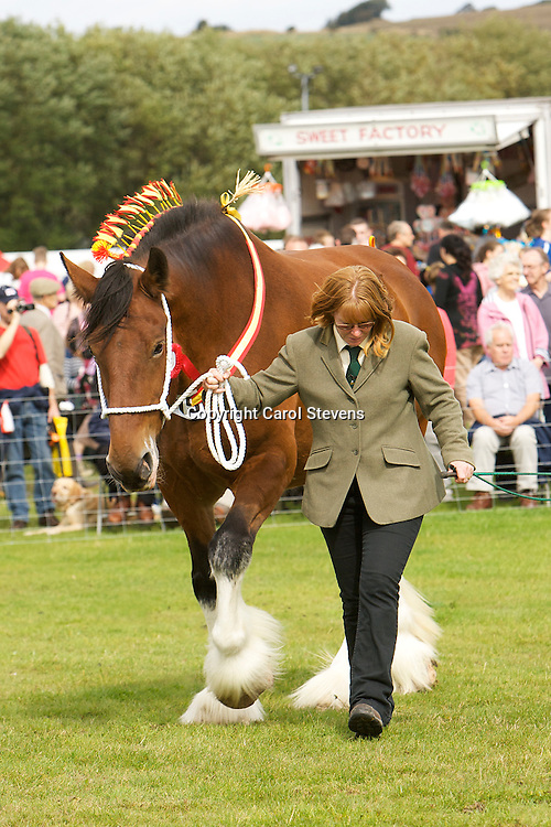 Heavy Horse classes at Penistone Show 2011<br />