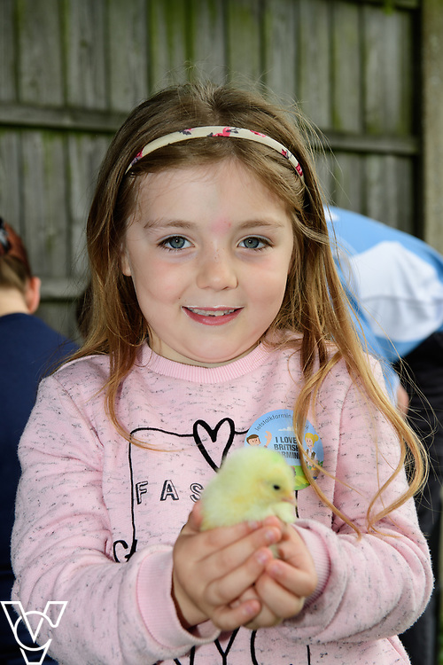 As part of Open Farm Sunday, May Park's Barr Farm in Billinghay, Lincolnshire, was open to the public.  Pictured is Chloe Holmes (six).<br /> <br /> PIcture: Chris Vaughan Photography<br /> Date: May 21, 2017