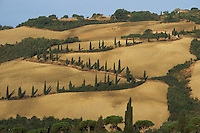 August 1997, Tuscany, Italy --- Cypress Trees Along Tuscan Road --- Image by © Owen Franken/CORBIS