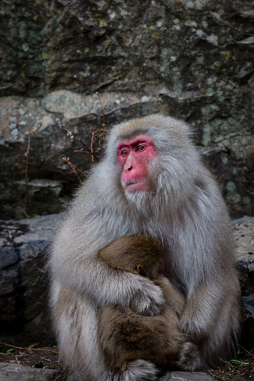A female monkey protects her child from the cold.