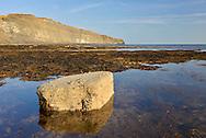 Coastal habitat at Kimmeridge Ledges, Dorset, UK