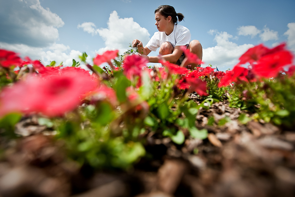 JEROME A. POLLOS/Press..Erica Latorre, 16, a member of the Coeur d'Alene High School student council, pulls weeds from a flower bed in front of the school Friday. The student council takes turns maintaining the flower bed throughout the summer.