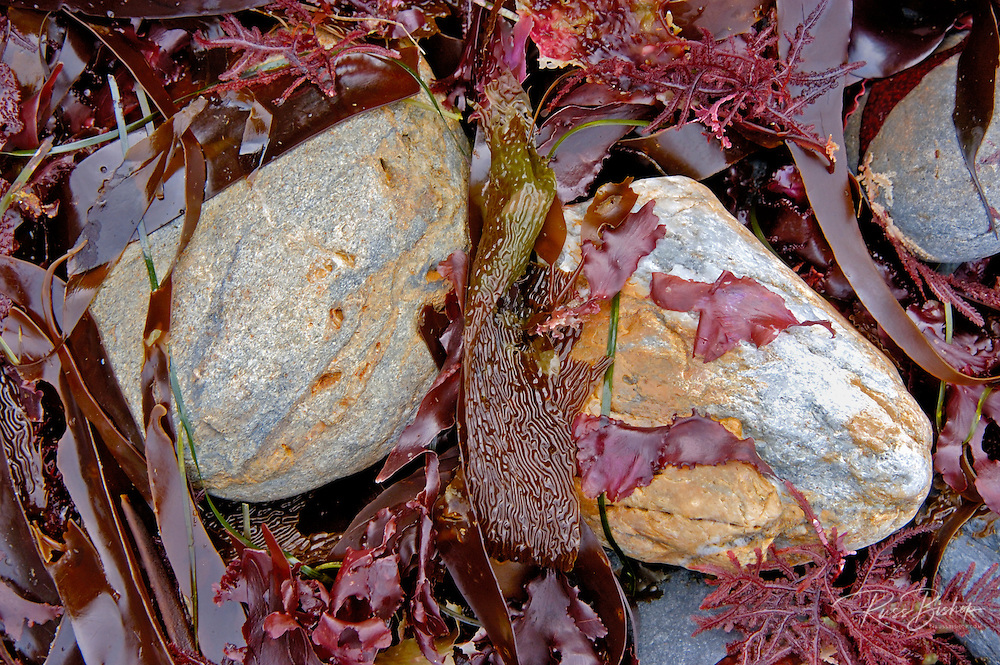 Rocks and kelp at Jade Cove, Big Sur Coast, California USA