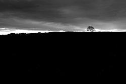 albero solitario in contrada Jannuzzo