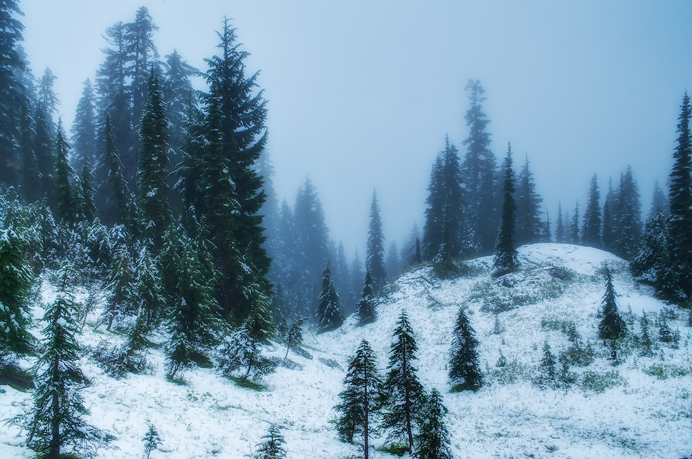 A snowy October day in the forested slopes of Mount Rainier near Paradise - that point where the roads end and the hiking trails begin. From here on up it's raw nature and the elements that reign.