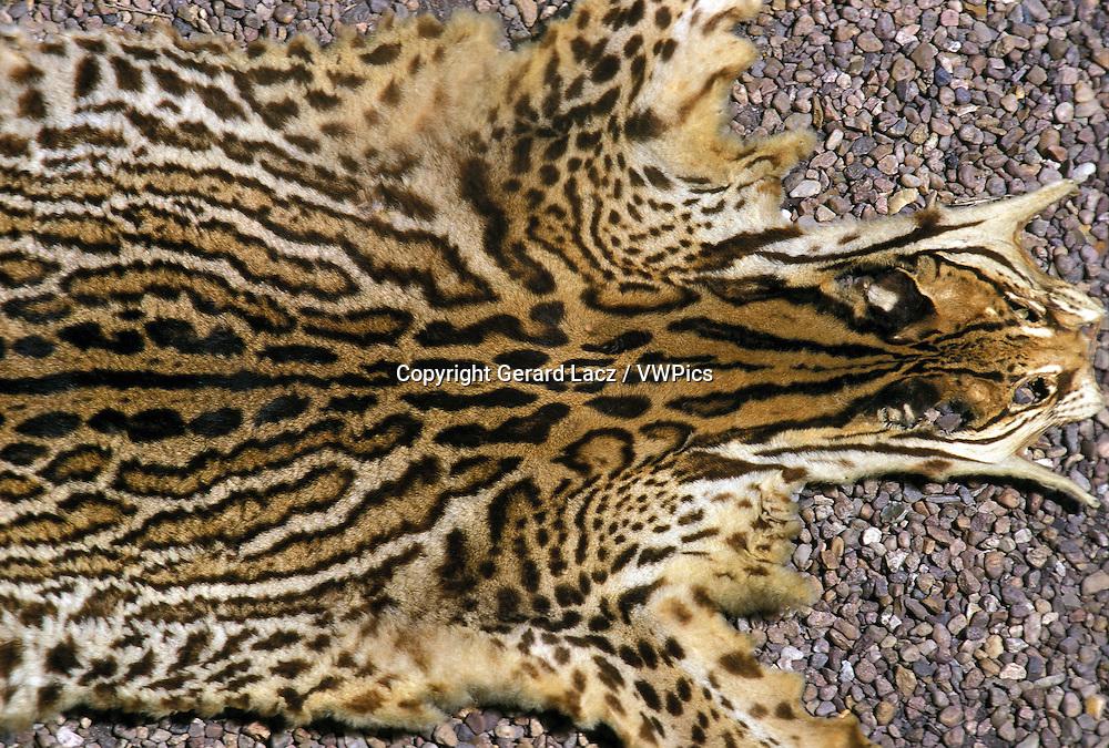 Ocelot, leopardus pardalis, Skin of Adult