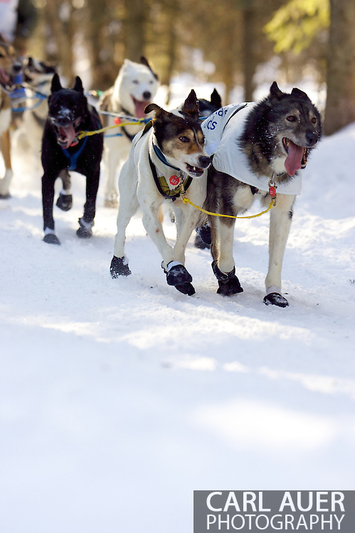 March 7th, 2009:  Anchorage, Alaska - The team of Kim Darst of Blairstown, New Jersey during the start of the 2009 Iditarod.