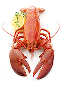 Cooked Maine whole lobster on white background