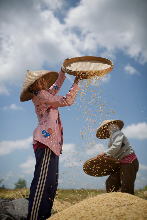Rice harvest, threshing and winnowing in the field in Bali. Women cut the rice, hand it to other women who thresh it in the basket with the netting around (to prevent the rice being lost) and then other women winnow out the straw and chaff. <br /> 1. Gusti Biang Sukada  (wear the pink shirt and winnowing)<br /> 2. Jro Made Ratna (wearing the Micky Mouse jacket and pink scarf)<br /> 3. Jro Nyoman Pada  (wearing the hat with leaves in it to keep her cool.<br /> 4. Biang Dewa Gede (wearing the white shirt, standing by basket.)<br /> <br /> These women are harvest for another farmer. They will get a bag of rice for every nine they harvest. (One in ten, in other words.)<br /> <br /> <br /> Contact for Agricultural Information:<br /> Agung Kamandalu<br /> Director Assessment Institute for Agricultural Technology (AIAT) Bali Province<br /> kamandalu_bptpbali@yahoo.co.id<br /> +6287861014500<br /> <br /> Or: <br /> Ketut Kariada<br /> Institute for Agricultural Technology (AIAT) Bali Province<br /> k_kariada@yahoo.com<br /> 081 239 545 483<br /> <br /> Or:<br /> Ketut Sudarta<br /> Driver and Guide<br /> ptarisundari@yahoo.com<br /> 081 338 353 229