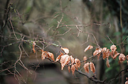 Maidenhead, United Kingdom.  General View, Autumn Leaves. Raymill Island banks of the River Thames. <br /> <br /> Friday  03/02/2017 <br /> <br /> © Peter SPURRIER,<br /> <br /> Leica Camera AG  LEICA M (Typ 262)  1/90 sec.  mm 1.4 100 ISO.  23.3MB