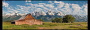 Springtime image of the Moulton Barn and cottonwood trees in front of the majestic Grand Teton mountain range in Jackson Hole, WY
