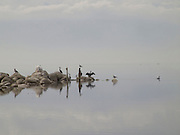 Tranquil view of birds on rocks Salton Sea lake bird sanctuary USA