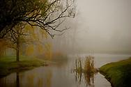 Fog rolling along a wetland stream.