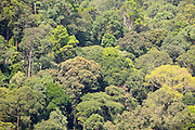 Rainforest canopy of Peradayan Forest Reserve, Brunei seen from Bukit Patoi's summit