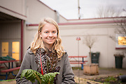 Isa Swain picks rainbow chard from her school's garden in Salem, Oregon.