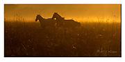 Horses in Pantanal running during sunrize. Nikon D4, 70-200mm @ 200mm, f5, EV-0.33, 1/320sec, ISO500