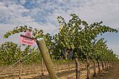 Klipsun vineyards