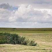 Nederland Walsoorden   gemeente Hulst  19 juni 2010 20100619       ..Serie landschappen provincie Zeeland. Zeeuws-Vlaanderen, landschap polderlandschap scenery met op de achtergrond de dijk van de westerschelde.   wisselvallig veranderlijk weer. Op de voorgrond een rietkraag, riet. Illustratief beeld  waterveiligheid, hollandse landschappen., sustainable, terrein, typerend, typical dutch landscape, typisch hollands, typisch hollands landschap, typische, uitgestrektheid, uitzicht, uniek, unieke, veiligheid, veld, vergezicht, vergezichten, verte, vrij, vrijheid weer, waaien, water level, waterbeheer, Waterbeheerplan, waterhuishouding, waterkering, waterkeringen, Waterkeringen, waterlevel, watermanagement, waterniveau, waterpeil, waterplan, waterproblematiek, waterstaatkundige, waterstand, watersysteem, waterveiligheid, waterveiligheid en gebiedsontwikkeling, waterwerken, weersomstandigheden, wei, weide, weidegang, weiland, weiland. Landscape, wijdheid, wijds, wijdsheid, wind, wit, witte, wolk, wolken, wolkenpartij, zeeland, zeeuws vlaanderen, zeeuws-vlaanderen, zeewering, zo vrij als een vogel, zonnig, zonnige dag, zware, zwitserleven gevoel. Foto: David Rozing