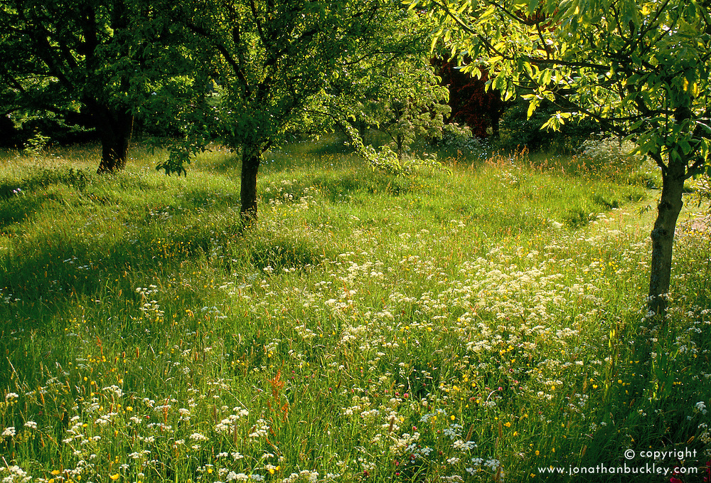 Evening light in the orchard meadow at Great Dixter