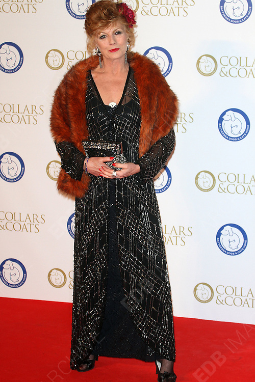 07.NOVEMBER.2013. LONDON<br /> <br /> (CODE - MH)<br /> THE ANNUAL COLLARS AND COATS GALA BALL IN AID OF BATTERSEA DOGS & CATS HOME AT BATTERSEA EVOLUTION<br /> <br /> BYLINE: EDBIMAGEARCHIVE.CO.UK<br /> <br /> *THIS IMAGE IS STRICTLY FOR UK NEWSPAPERS AND MAGAZINES ONLY*<br /> *FOR WORLD WIDE SALES AND WEB USE PLEASE CONTACT EDBIMAGEARCHIVE - 0208 954 5968*