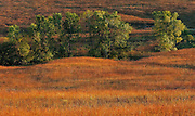 Early morning light on trees at the Tall Grass Prairie Preserve, Kansas