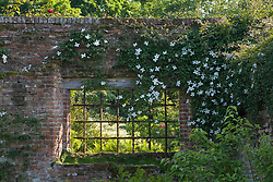 Window in the wall between the Tower Lawn and Rose Garden at Sissinghurst Castle. Clematis on the wall