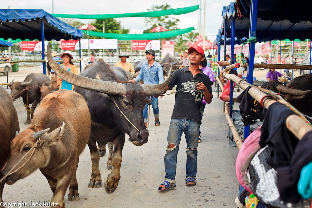 03 OCTOBER 2009 -- CHONBURI, THAILAND: A man takes his water buffalo to the registration area before the first day of races at the Chonburi Buffalo Races Festival, Saturday, Oct. 3. Contestants race water buffalo about 200 meters down a muddy straight away. The buffalo races in Chonburi first took place in 1912 for Thai King Rama VI. Now the races have evolved into a festival that marks the end of Buddhist Lent and is held on the first full moon of the 11th lunar month (either October or November). Thousands of people come to Chonburi, about 90 minutes from Bangkok, for the races and carnival midway.   PHOTO BY JACK KURTZ